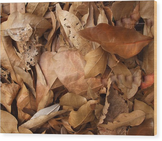 Family Of Leaves Wood Print by Janet  Telander