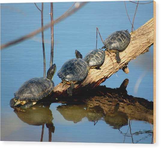 Family Of Turtles Wood Print by Bob Guthridge