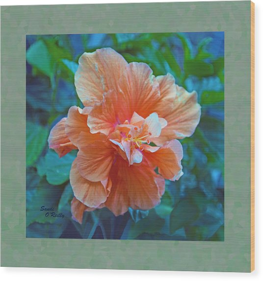 Fancy Peach Hibiscus Wood Print