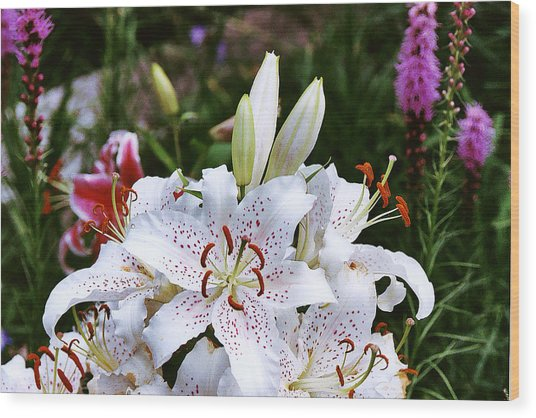 Fancy White Lily In Garden Wood Print