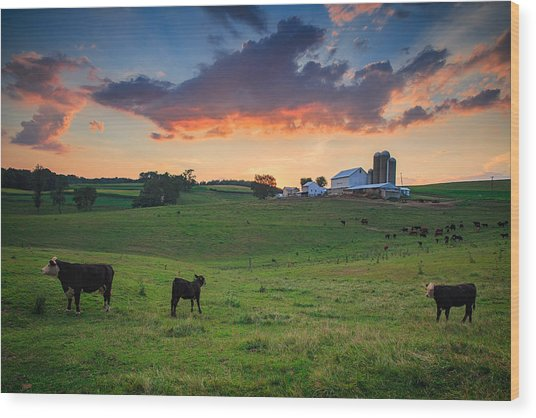 Farm Life In Beaver County Wood Print