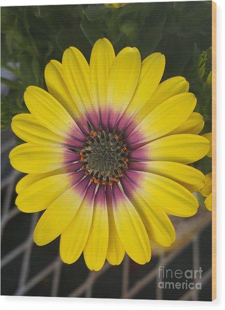 Fascinating Yellow Flower Wood Print