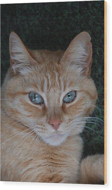 Fat Cats Of Ballard 5 Wood Print