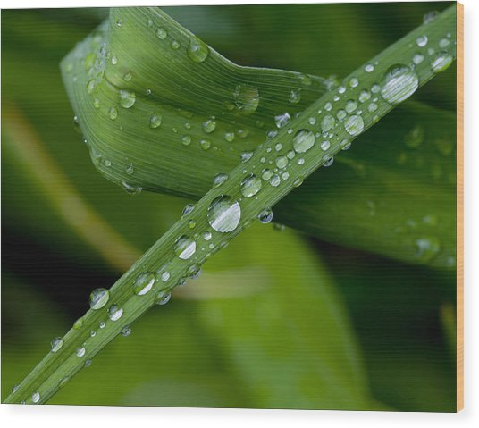 Fat Raindrops Wood Print by Robert Ullmann