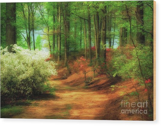 Wood Print featuring the photograph Favorite Path by Lois Bryan