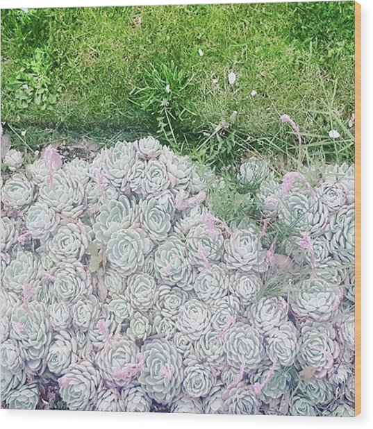 Favourites Growing Outside A Flat Round Wood Print by Natalie Anne