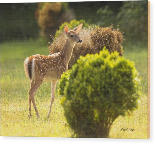 Wood Print featuring the photograph Fawn by Angel Cher
