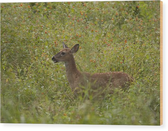Fawn In A Field Of Flowers Wood Print by Tina B Hamilton