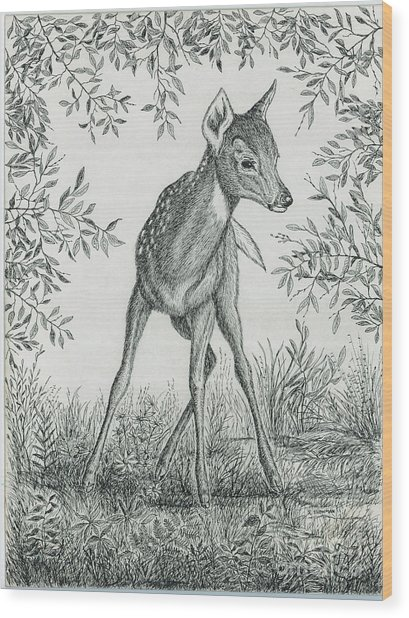 Fawn In Clearing Wood Print by Samuel Showman