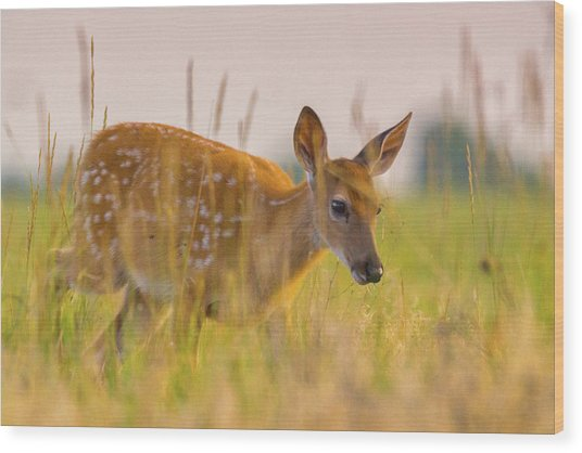 Wood Print featuring the photograph Fawn In Grasslands by John De Bord