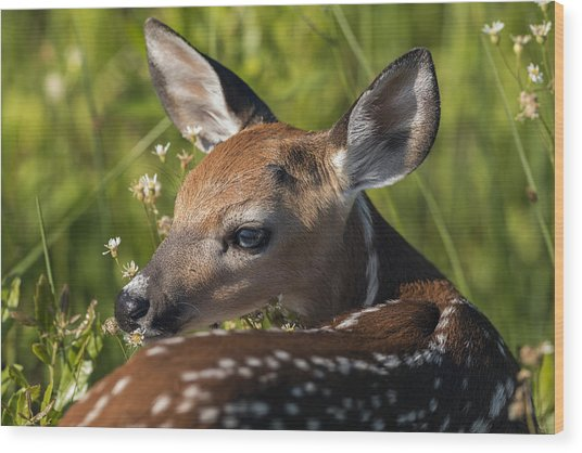 Fawn Over The Shoulder Wood Print