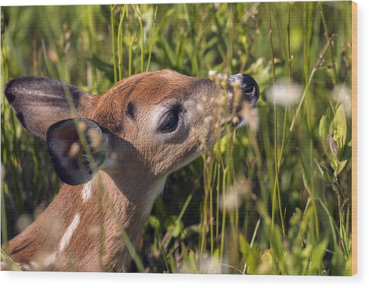 Fawn Smelling The Wildflowers Wood Print