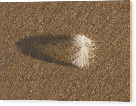 Feather Arch Wood Print