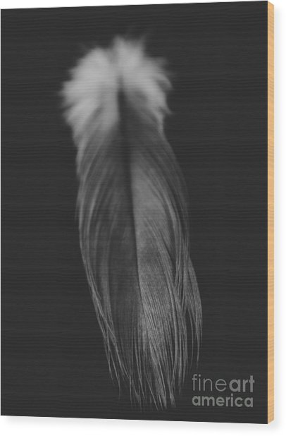 Feather In Black And White Wood Print