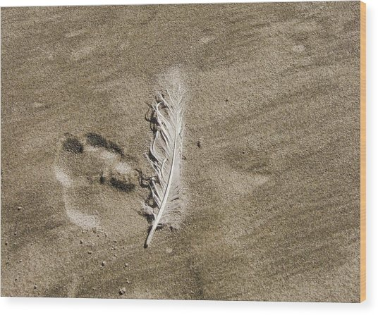 Feather Print Wood Print by JAMART Photography