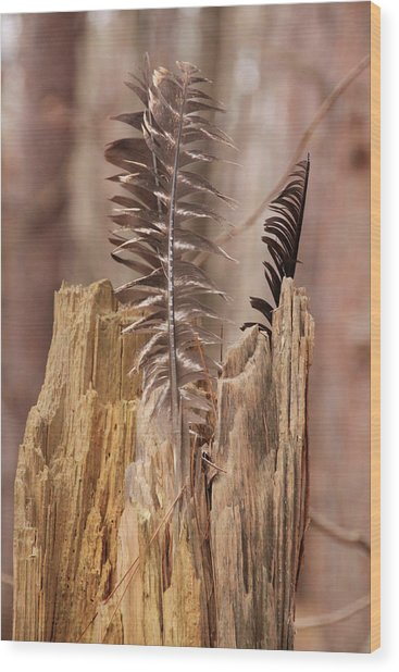 Feathers And A Stump. Casey Park, Ontario, Ny Wood Print