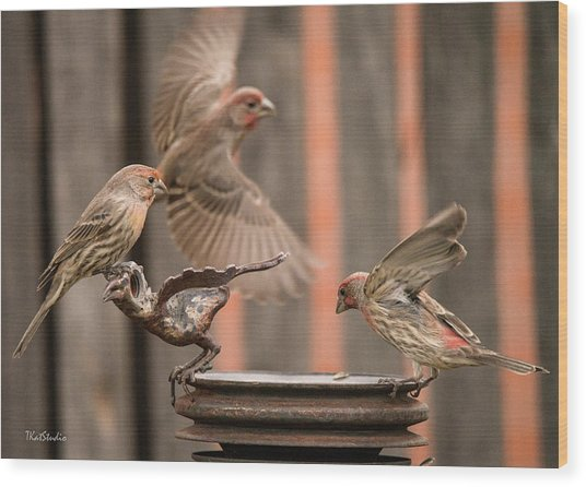 Feeding Finches Wood Print