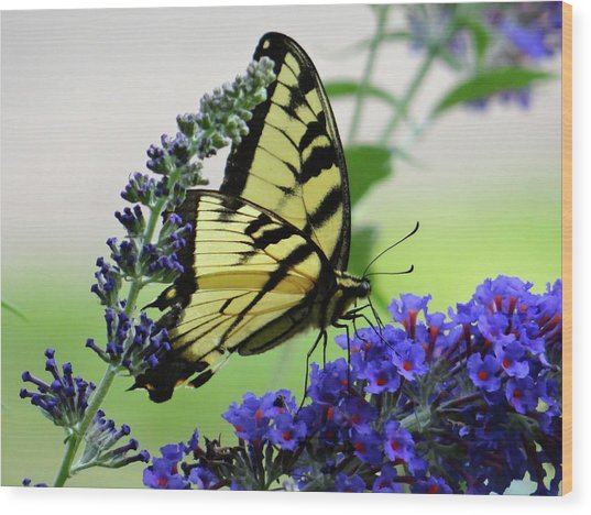 Feeding From A Nectar Plant Wood Print