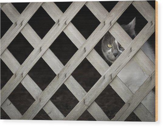 Feline Fence Wood Print