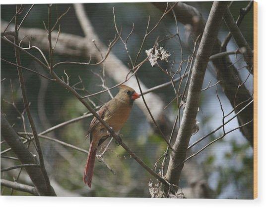 Female Cardinal 3 Wood Print