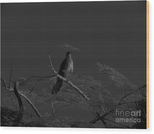 Female Grackle Wood Print