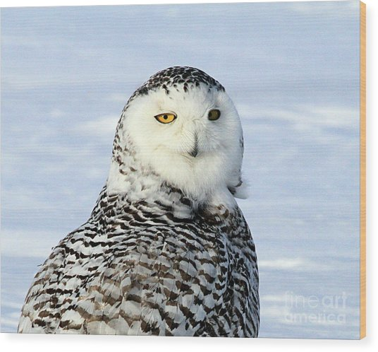 Female Snowy Owl Wood Print