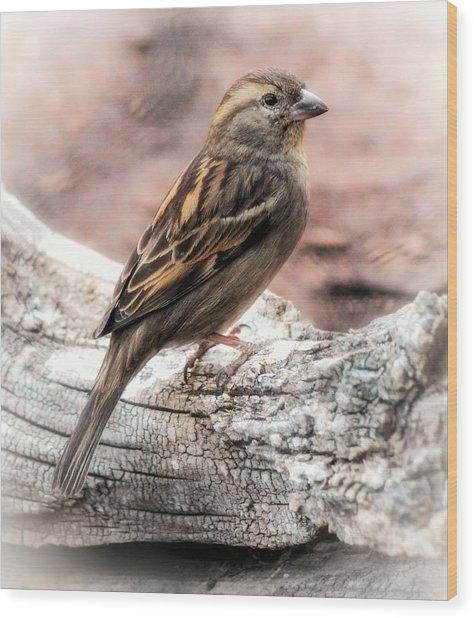 Female Sparrow Wood Print