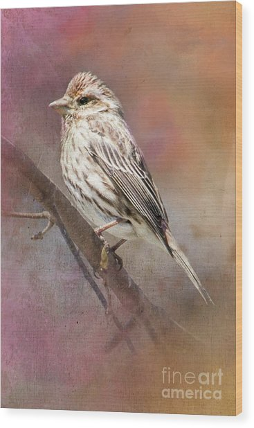 Female Sparrow On Branch Ginkelmier Inspired Wood Print