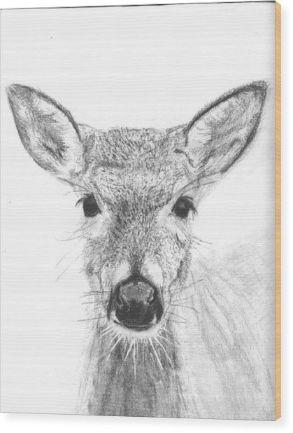 Female White-tailed Deer Wood Print by Marqueta Graham