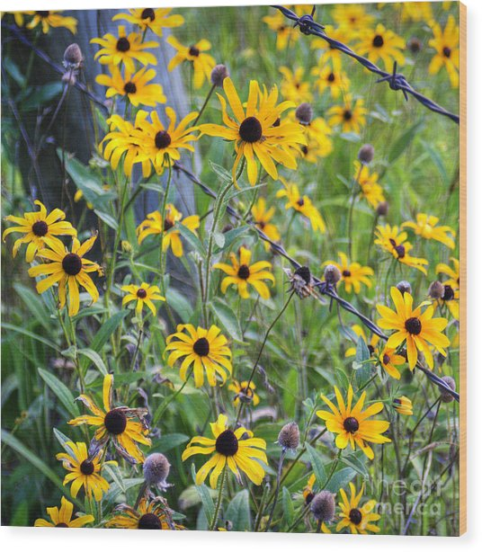Fence Row Flowers Wood Print