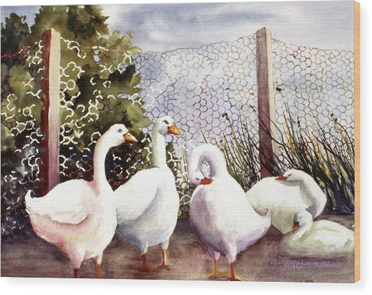 Fenced In Quackers Wood Print