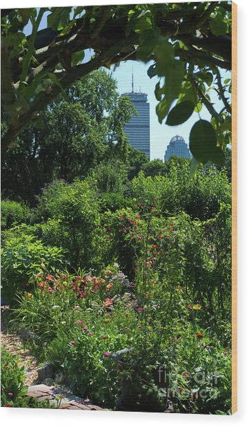 Fenway Victory Gardens In Boston Massachusetts  -30951-30952 Wood Print