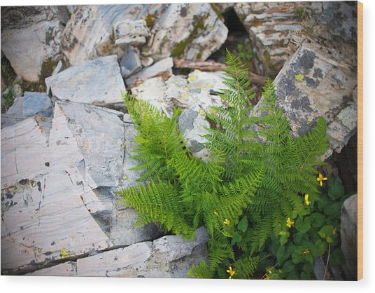 Fern Among Glacial Rock Wood Print