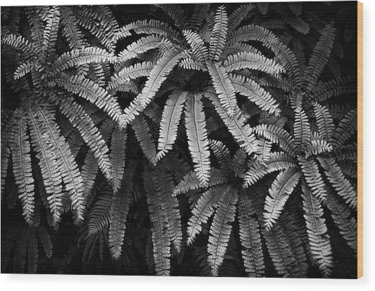Fern And Shadow Wood Print