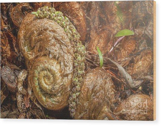 Fern Headdress Wood Print