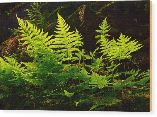 Fern Light Wood Print