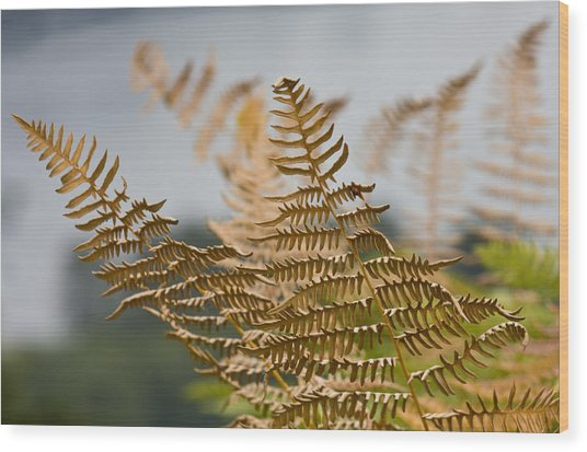 Ferns Growing By The River Wood Print by Barbara  White