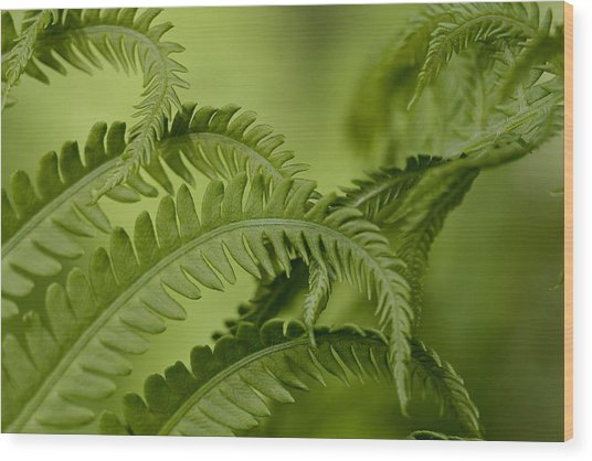 Wood Print featuring the photograph Ferns by Jane Melgaard