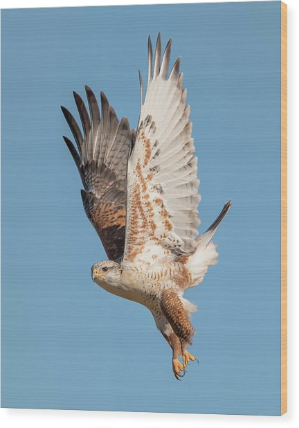 Fledgling Launch Wood Print by Loree Johnson
