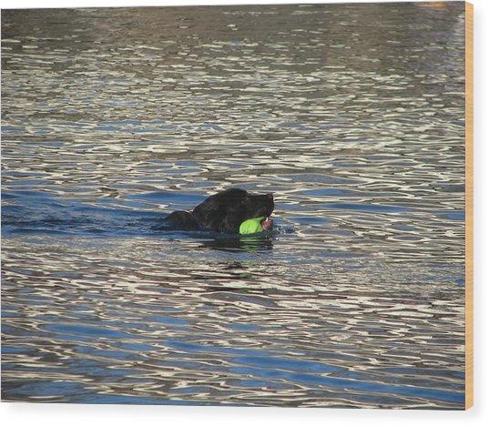 Fetch  Swimming 2 Wood Print by Hasani Blue