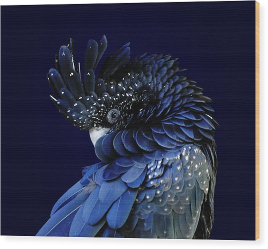 Fibonacci Cockatoo Wood Print