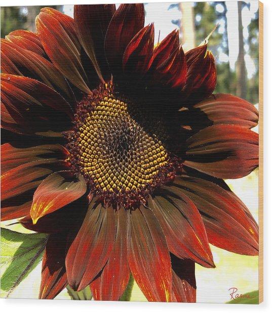 Fibonacci Hues Wood Print