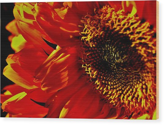 Fickle Sunflower Wood Print