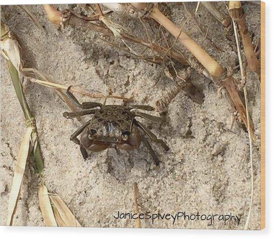 Fiddler Crab Wood Print