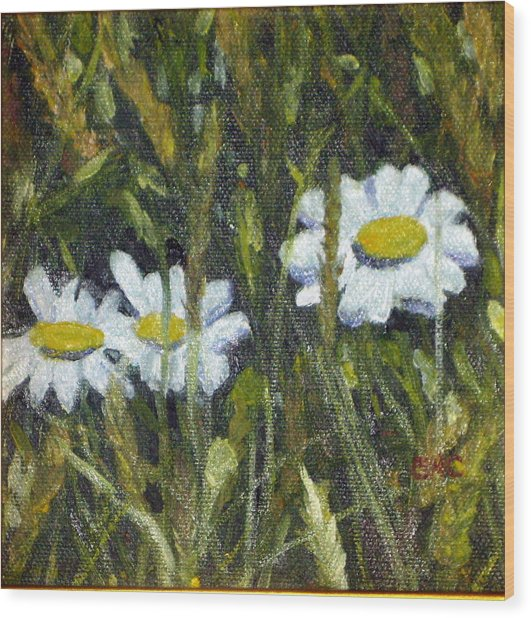 Field Daisies Wood Print by Susan Coffin