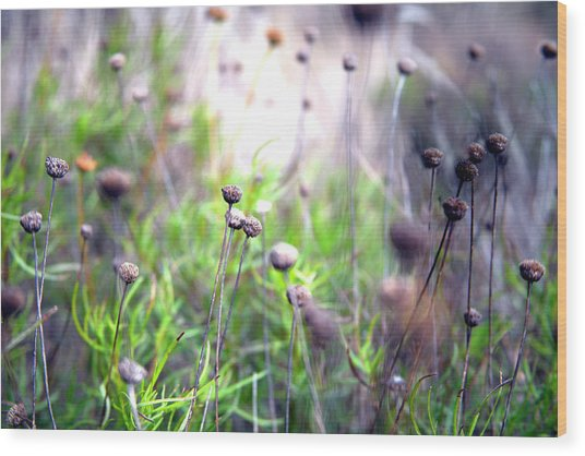 Field Flowers Wood Print