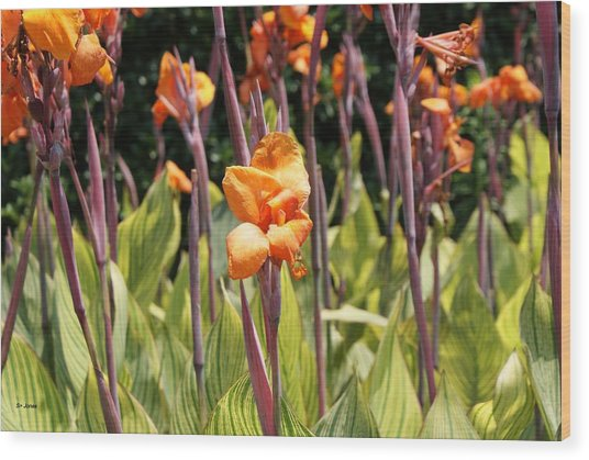 Field For Iris Wood Print