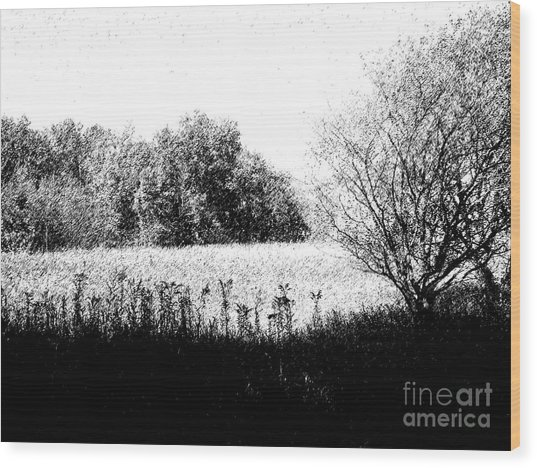 Field In Black And White Wood Print by John  Bichler