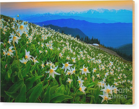 Field Of Avalanche Lilies Wood Print