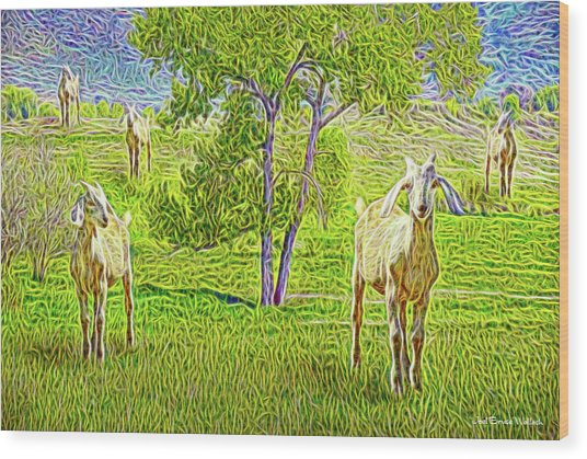Field Of Baby Goat Dreams Wood Print